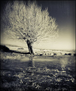 Mark Sadlier TREE IN FLOODED FIELD Lakes/Rivers