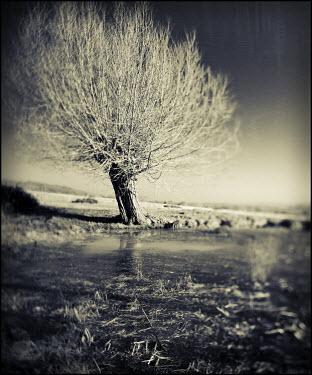 Mark Sadlier TREE IN FLOODED FIELD Lakes/Rivers