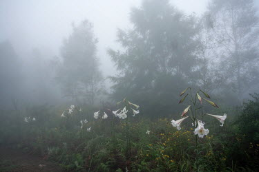 Neil Overy FIELD AND TREES IN FOG Flowers/Plants