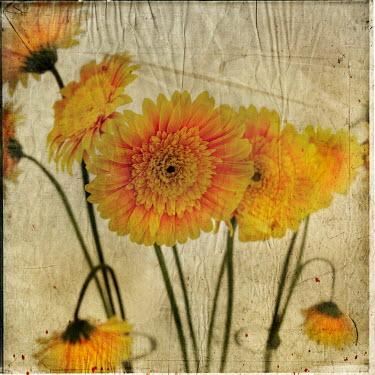 Vanesa Munoz YELLOW FLOWERS Flowers/Plants