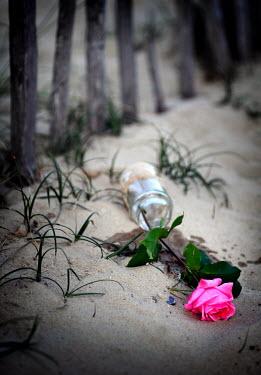 Adrian Muttitt FALLEN JAR WITH ROSE Flowers/Plants