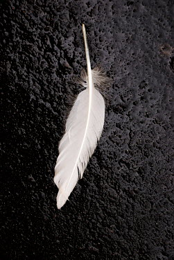 Valentino Sani FEATHER ON FLOOR Miscellaneous Objects