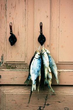 Katya Evdokimova A CATCH OF FISH ON HOOK Fish