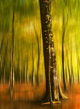 Michael Howell Trees/Forest