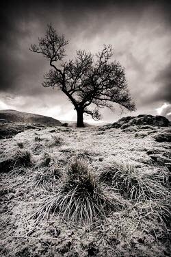 Paul Knight LONE TREE IN SNOWY FIELD Trees/Forest