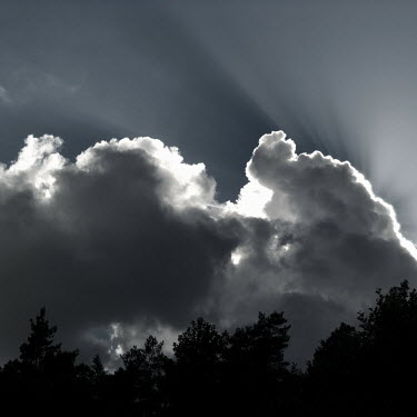 Douglas Black STORMY CLOUDS ABOVE FOREST Trees/Forest