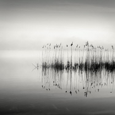 Jonathan Chritchley REEDS AND LAKE Lakes/Rivers