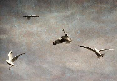 Mari Owen Birds