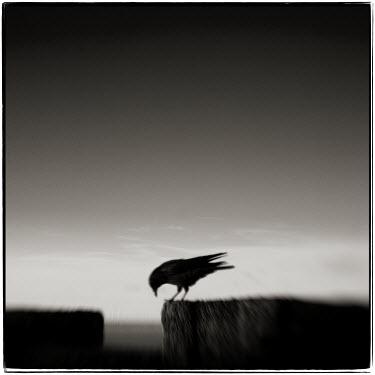Steve Deer Birds