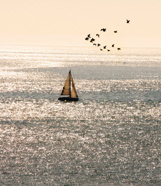 Claire Morgan BOAT AND BIRDS AT SEA Seascapes/Beaches