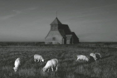 Chris Friel SHEEP IN FIELD WITH REMOTE HOUSE Religious Buildings