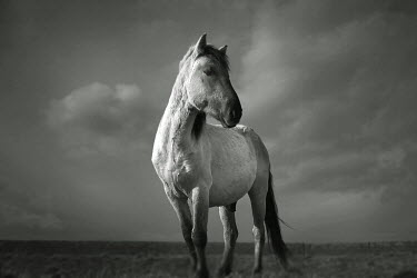 Chris Friel HORSE IN FIELD Animals