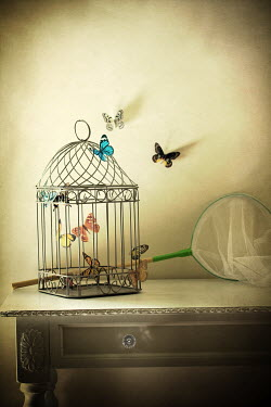 Susan Fox BUTTERFLIES FLYING AROUND BIRDCAGE Miscellaneous Objects