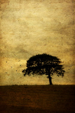 Clayton Bastiani TREE IN FIELD Trees/Forest