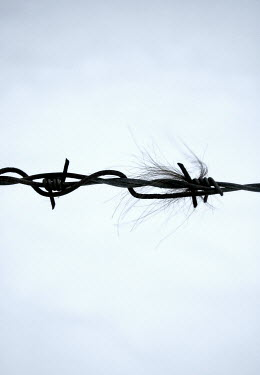 Ilona Wellmann HAIR ON BARBED WIRE Miscellaneous Objects