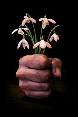 Paul Knight HAND HOLDING FLOWERS Flowers/Plants