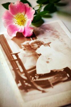 Susan Fox OLD PHOTOGRAPH OF CHILDREN NEXT TO FLOWER Children