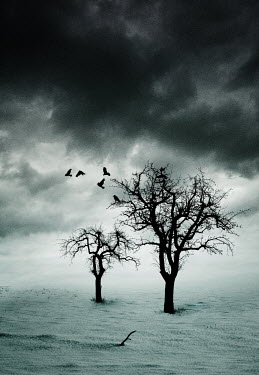Yolande de Kort TREES WITH STORMY SKY AND BIRDS Trees/Forest