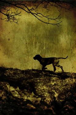 Lorand Ercsei DOG IN FIELD Animals