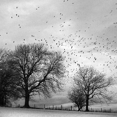 Matt Nuttall Trees/Forest