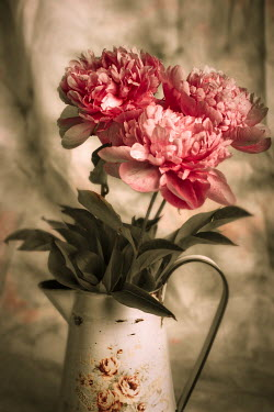 Jitka Saniova PINK FLOWERS IN METAL JUG Flowers/Plants