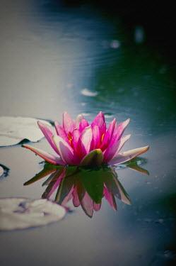 Rolf Brenner Flowers/Plants
