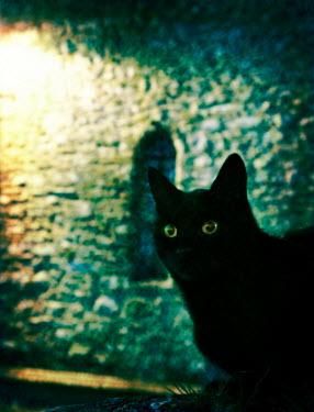 Dave Curtis CAT IN STREET LIGHT Animals