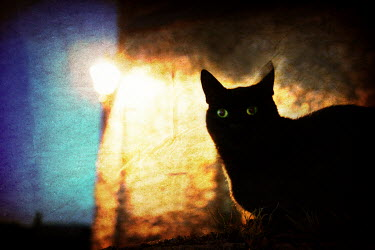 Dave Curtis CAT WITH STREET LIGHT Animals