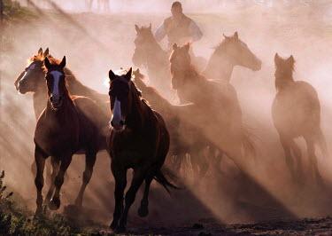 Nick Sokoloff MAN HERDING HORSES Men
