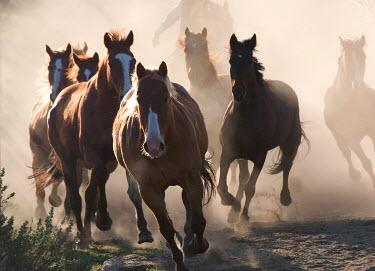 Nick Sokoloff GROUP OF RUNNING HORSES Men