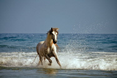 Nick Sokoloff HORSE GALLOPING IN WATER Animals