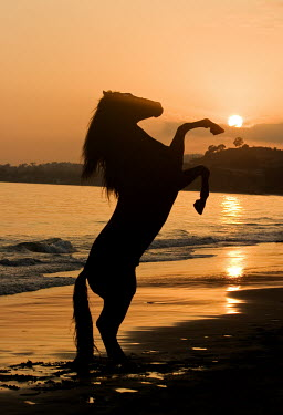 Nick Sokoloff SILHOUETTE OF HORSE ON BEACH WITH SUNSET Animals