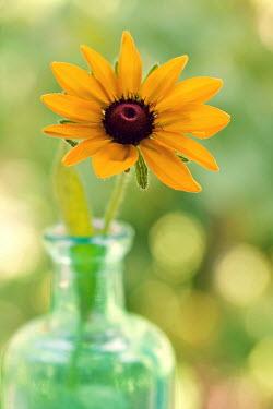 Susan Fox ORANGE FLOWER GLASS BOTTLE Flowers/Plants