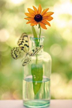 Susan Fox BUTTERFLY FLOWER BOTTLE GLASS Insects