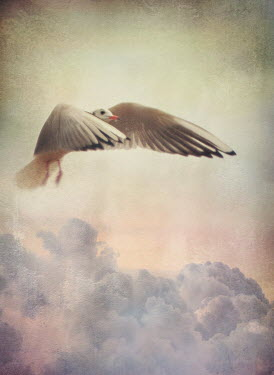 Mark Owen WHITE DOVE FLYING CLOUD Birds