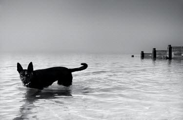 Chris Friel DOG IN SEA Animals