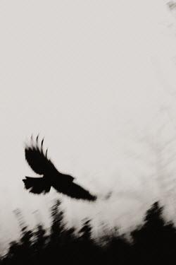Paul Webster BIRD FLYING SKY BUSHES Birds