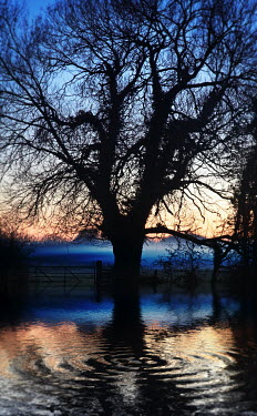 Dave Curtis TREE GATE COUNTRYSIDE WATER SUNSET Trees/Forest