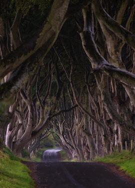 John Hooton Trees/Forest