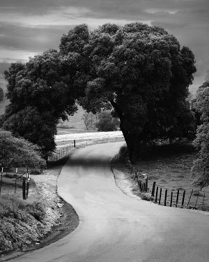 Eleanor Caputo natural archway over road Roads
