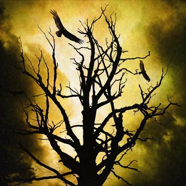 Trevor Payne BARE TREE IN WINTER WITH EAGLES Birds