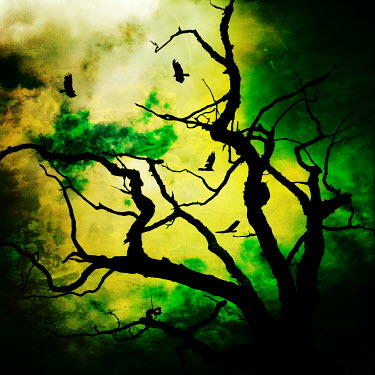 Trevor Payne TREE IN WINTER WITH BIRDS Birds