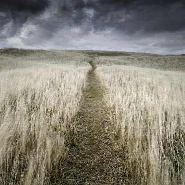 Jonathan Chritchley PATH THROUGH GRASSY FIELD Paths/Tracks