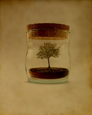Peter Hatter MINIATURE TREE IN JAR Trees/Forest