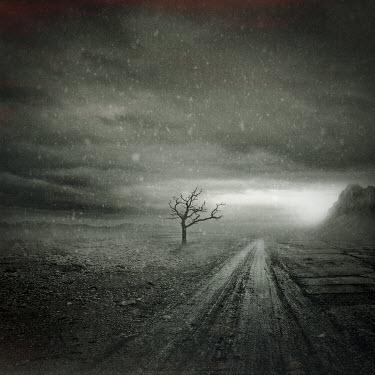 Christophe Dessaigne DESOLATE MUDDY ROAD WITH TREE Paths/Tracks