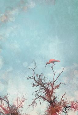David Pairé PINK BIRD ON TREETOP Birds