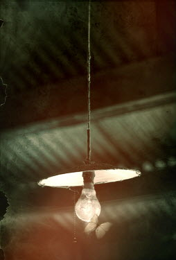 David Pairé BUTTERFLY FLUTTERING BY LIGHT BULB Insects