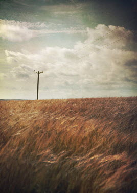 Mark Owen Telephone wire in field Fields