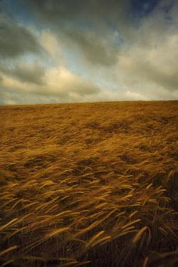 Steve Bond Field Fields