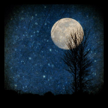 Clayton Bastiani FULL MOON Trees/Forest